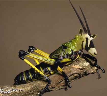 Ảnh côn trùng