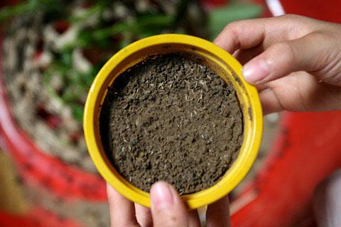 Kỹ thuật nuôi dế mèn - dùng khay đất ẩm cho dế đẻ